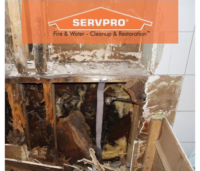 A drywall covered with black mold